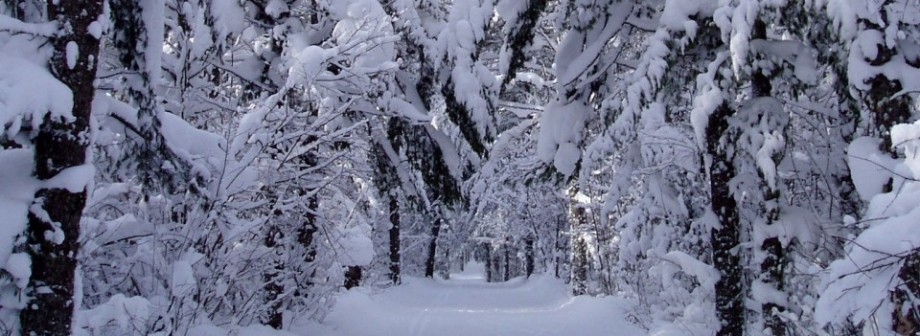 Where To Play This Winter?